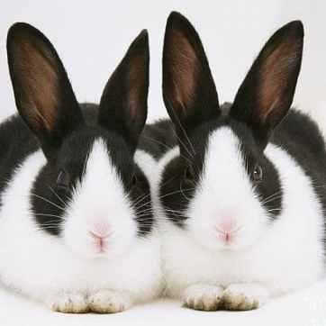 cuantas-razas-de-conejos-hay-4_opt