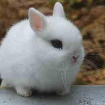 cuantas-razas-de-conejos-hay-5_opt