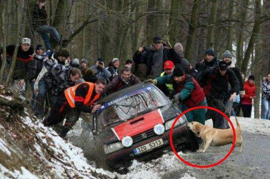 funny dog photo, dog helping pull car from ditch