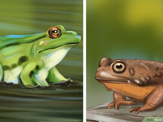Immagine titolata Tell the Difference Between a Frog and a Toad Step 8