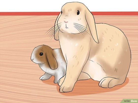 Immagine titolata Care for a House Rabbit Step 19
