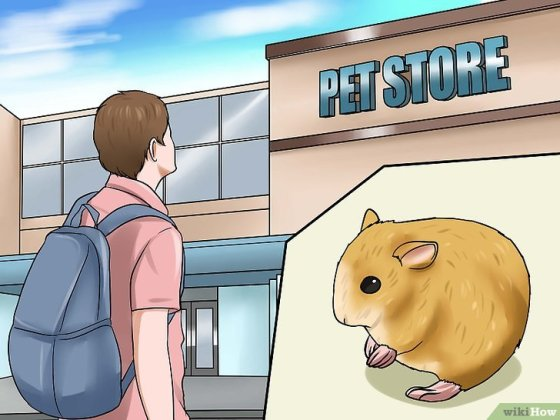 Immagine titolata Deal With Your Hamster Dying Step 15