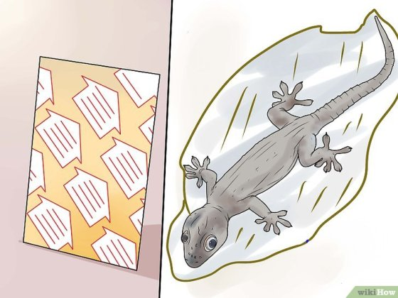 Immagine titolata Get Rid of Common House Geckos Step 3