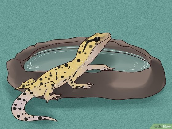 Immagine titolata Care for a Leopard Gecko Step 8
