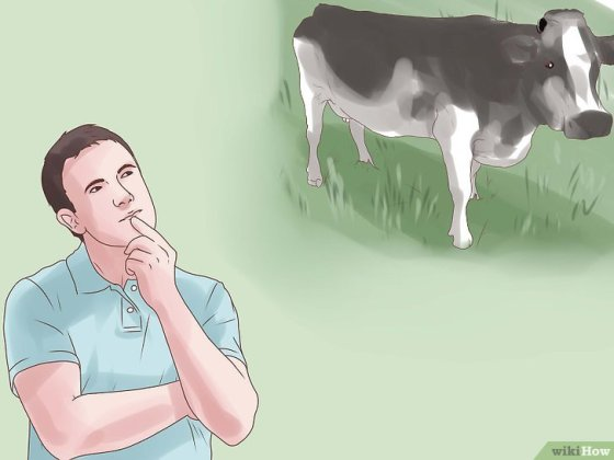 Immagine titolata Choose a Good Dairy Cow Breed Step 1