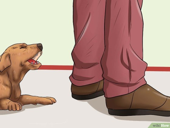 Immagine titolata Get Your Small Dog to Stop Biting and Barking at You Step 5