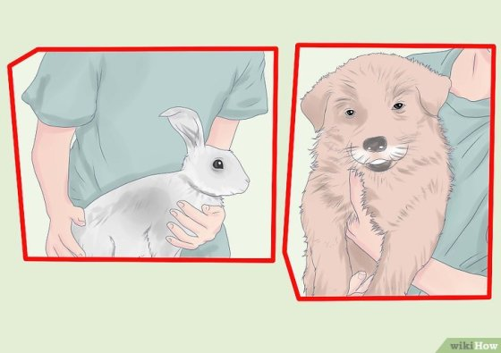 Immagine titolata Introduce a Dog and a Rabbit Step 4