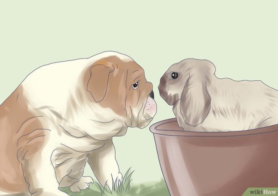 Immagine titolata Introduce a Dog and a Rabbit Step 5