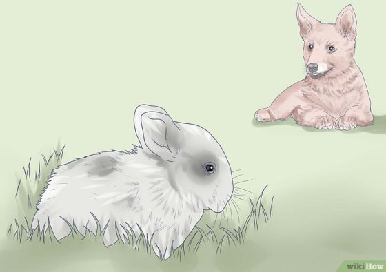 Immagine titolata Introduce a Dog and a Rabbit Step 6