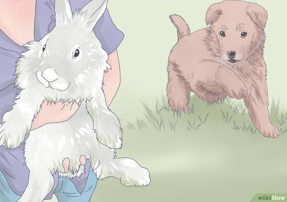 Immagine titolata Introduce a Dog and a Rabbit Step 7