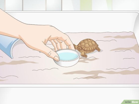 Immagine titolata Take Care of a Baby Tortoise Step 6