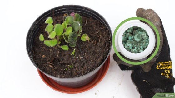 Immagine titolata Grow Potted Plants Step 17