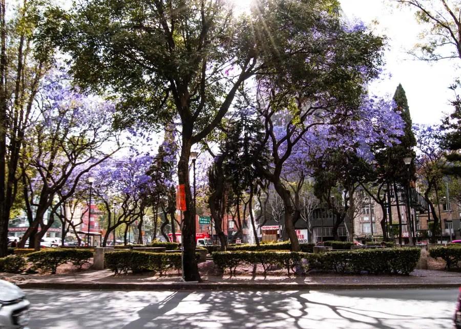 Condesa Park Mexico City