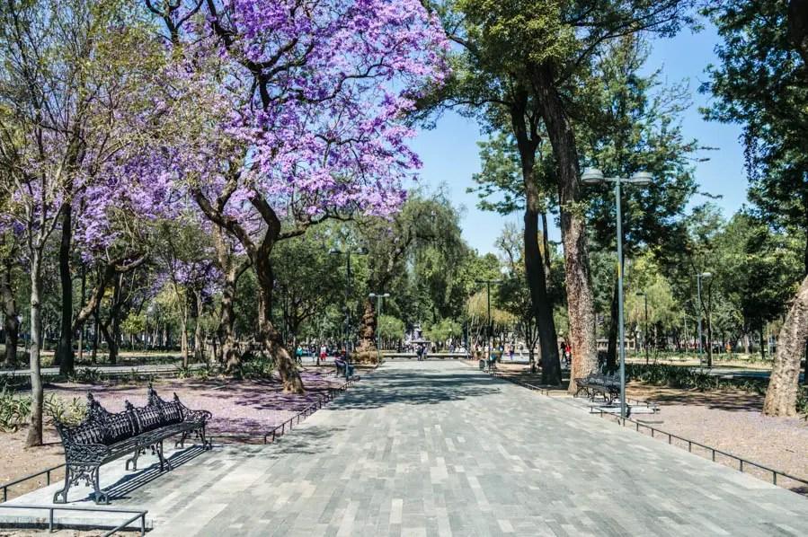 Alameda Central Jacarandas in Mexico City
