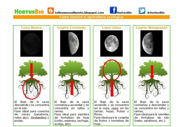 Influencia-lunar-y-agricult