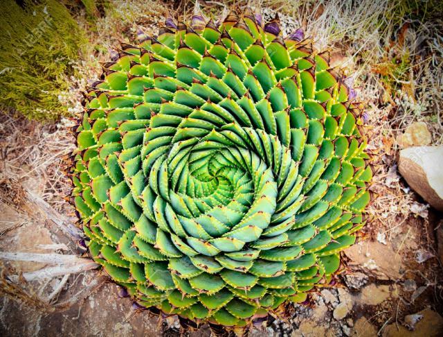 plantas-formas-geometricas (1)