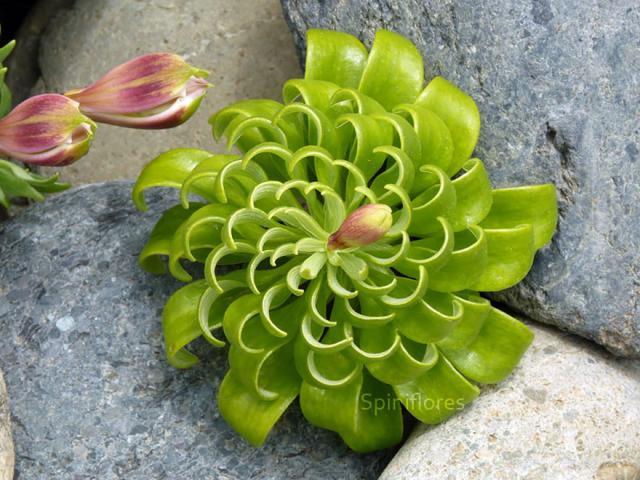 plantas-formas-geometricas (10)