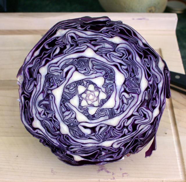 plantas-formas-geometricas (4)