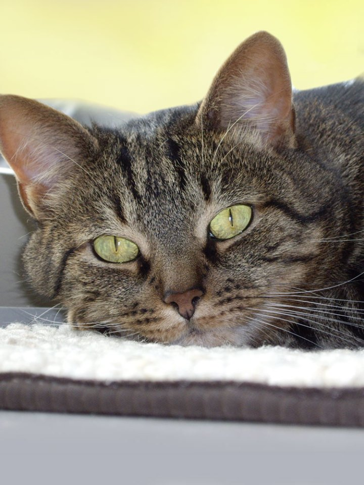 cat loss tribute