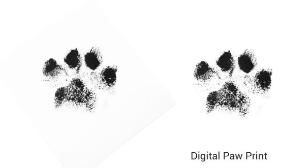 digital paw print created from a inkpad print