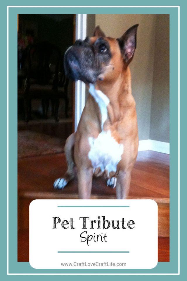 boxer dog loss