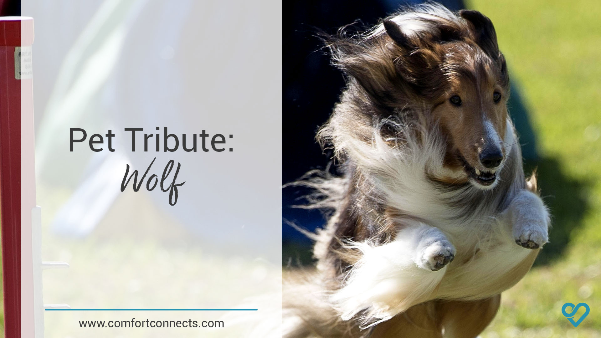 Pet Tribute: Wolf