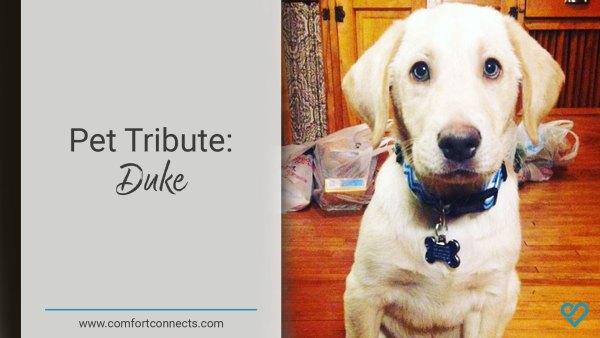 Pet Tribute: Duke