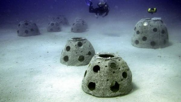 coral reefs with ashes
