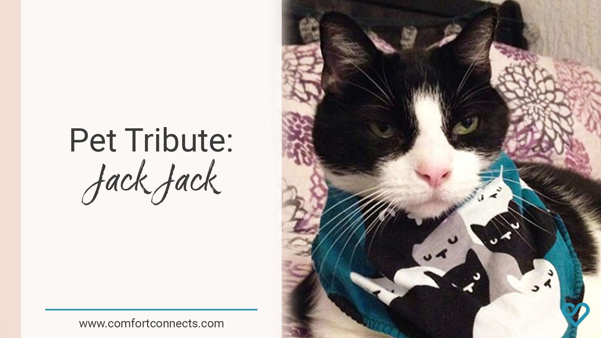 Pet Tribute: Jack Jack