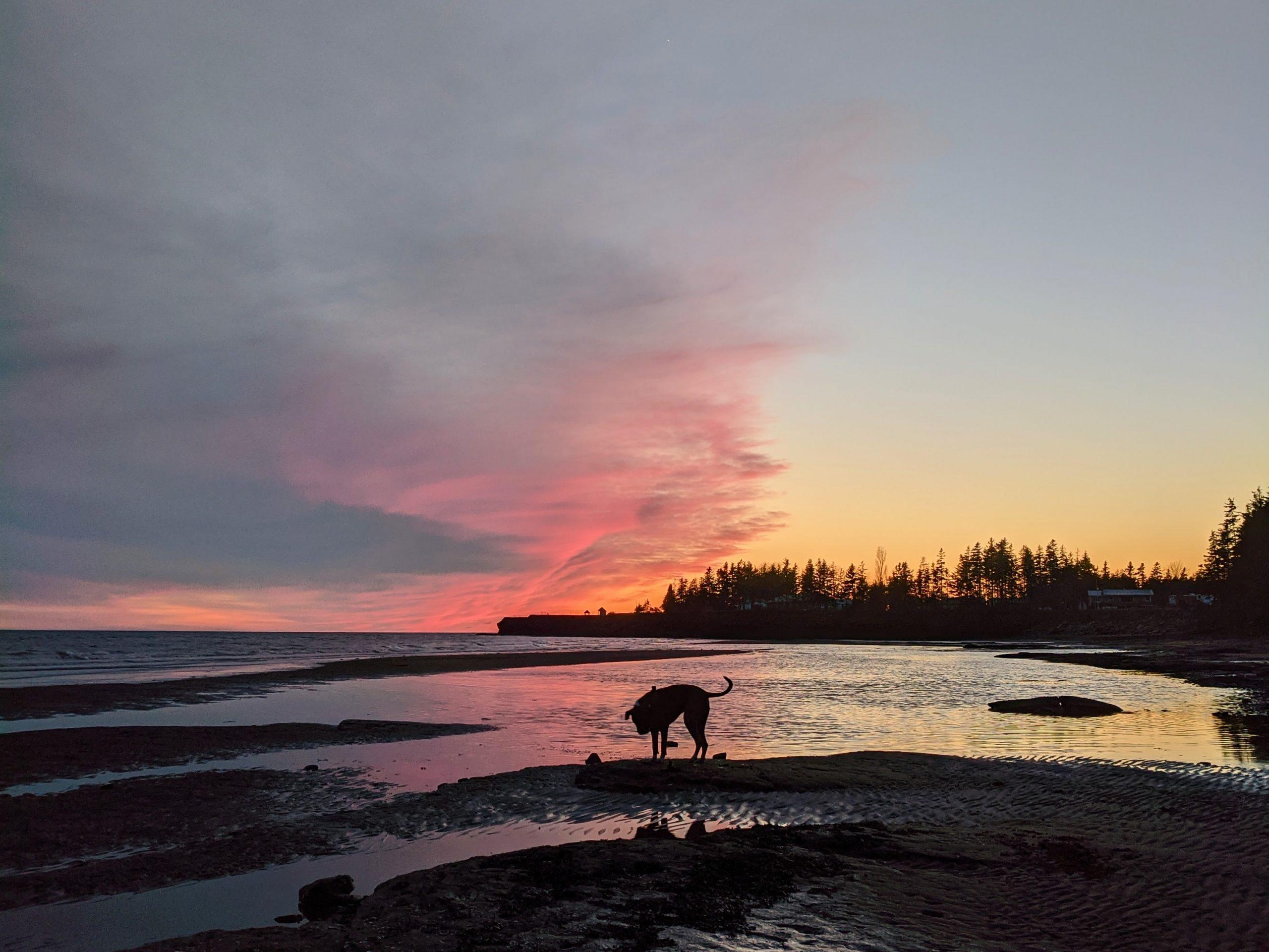 sunset with dog