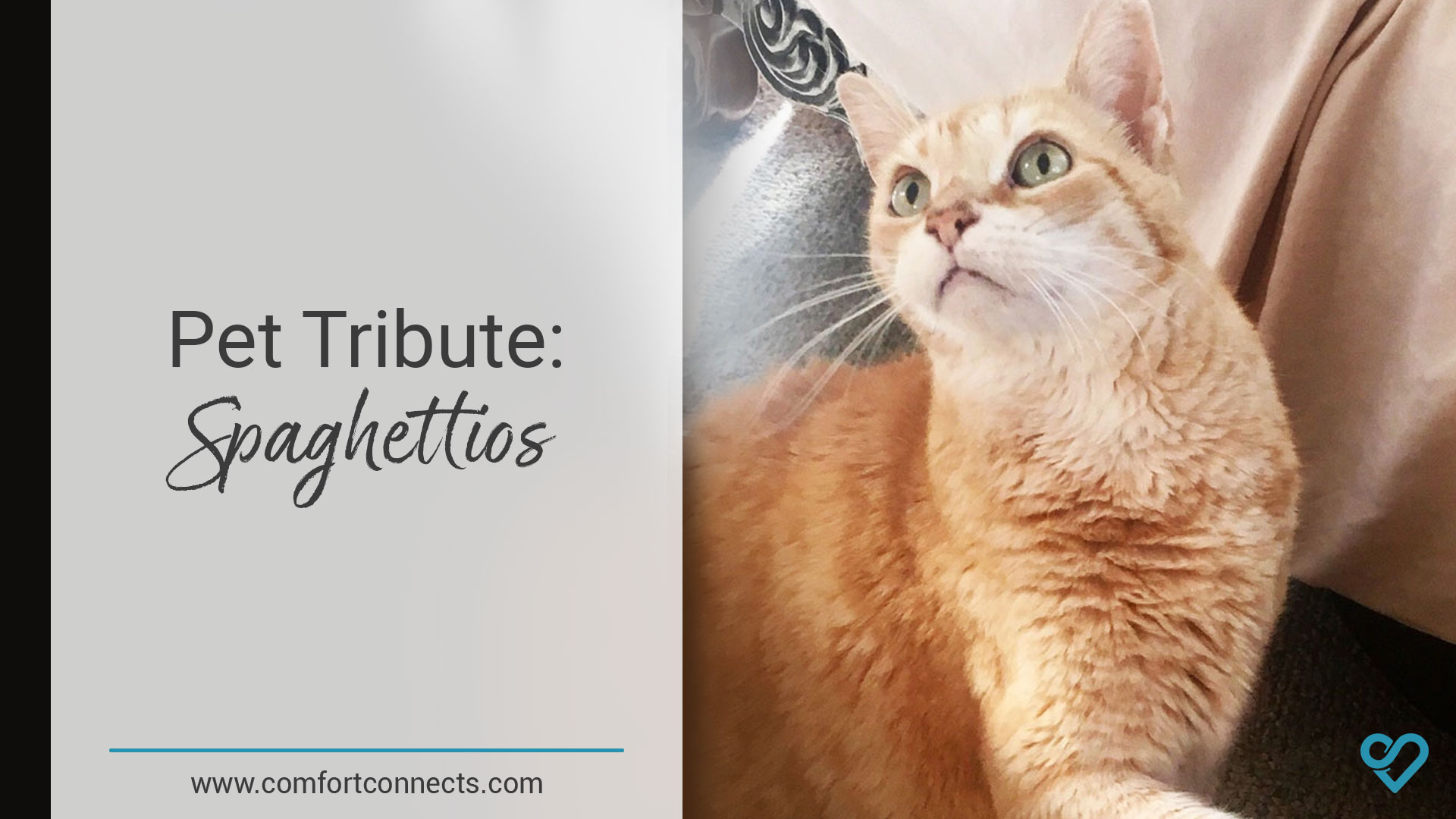 Pet Tribute: Spaghettios