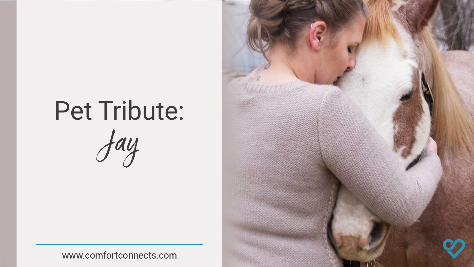 Pet Tribute: Jay