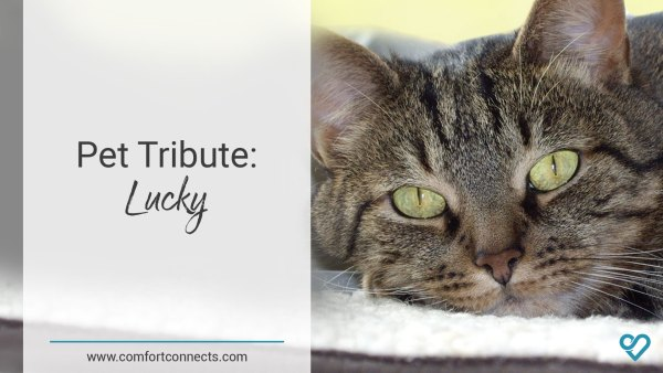 Pet Tribute: Lucky