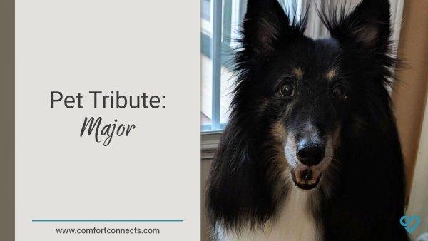 Pet Tribute: Major