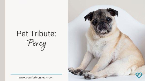 Pet Tribute: Percy