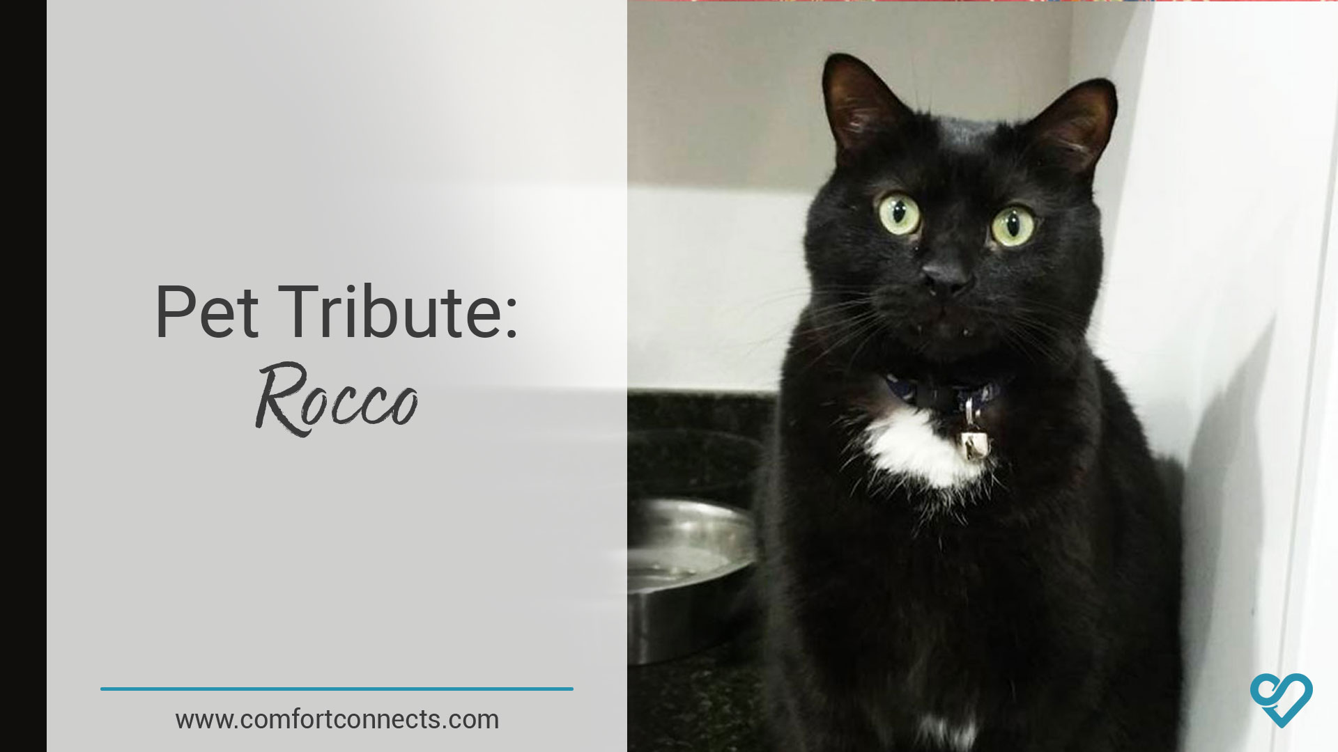 Pet Tribute: Rocco