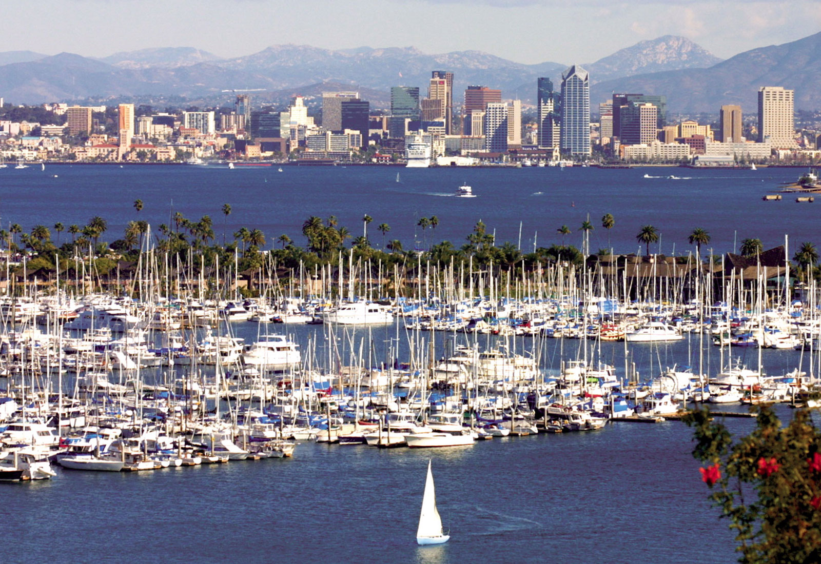 San Diego Harbor Cruises Boat Tours Amp Whale Watching