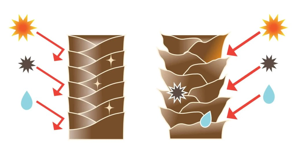 Low porosity hair versus high porosity hair illustration. When the layers of the cuticle lay flat against each other (on the left), there are fewer openings, which makes the hair strand less permeable to water (and other things). When the layers of the cuticle are lifted (on the right), there are more openings between them. Making the strand more permeable.