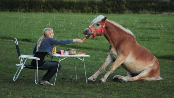 horse lunch horse lunch
