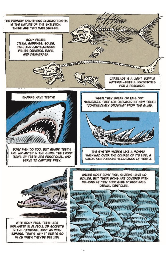LittleBookOfKnowledge_Shark-pr-7 ComicList Previews: THE LITTLE BOOK OF KNOWLEDGE SHARKS HC