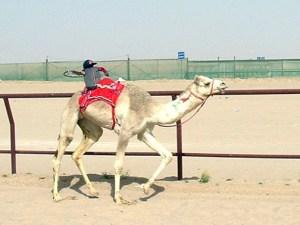 camelJockey