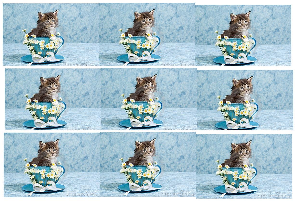 kitten in a teacup.jpg