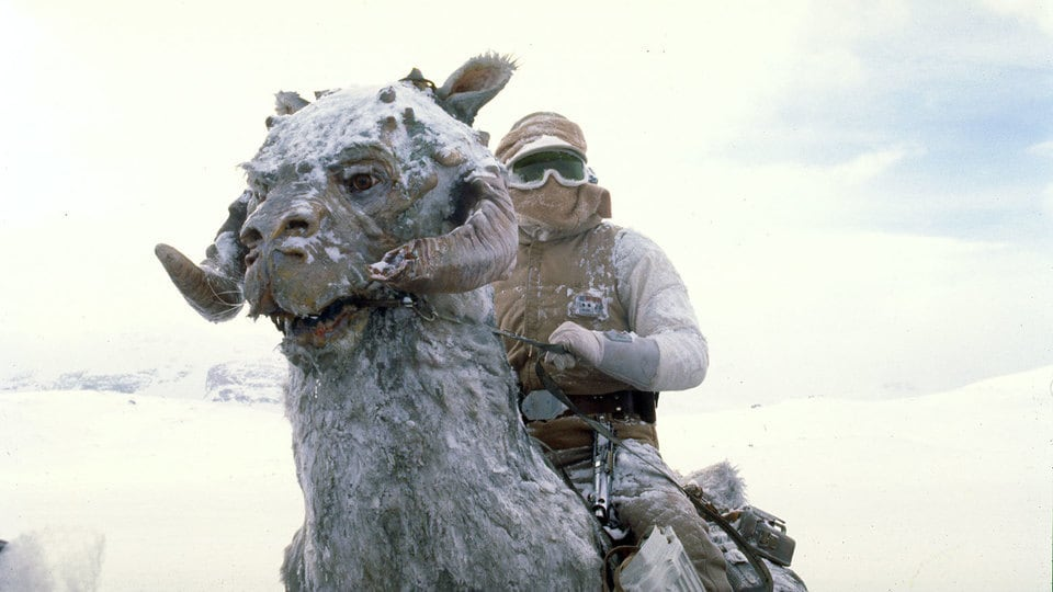 Cute beings in Star Wars: Tauntauns