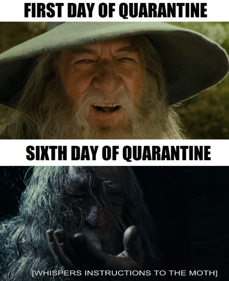 Gandalf and quarantines unite for memes