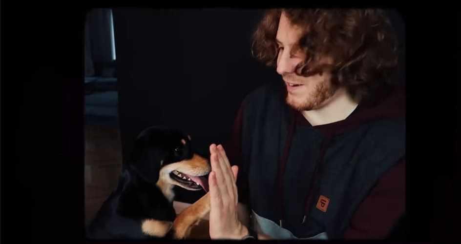 unges hund knubbel
