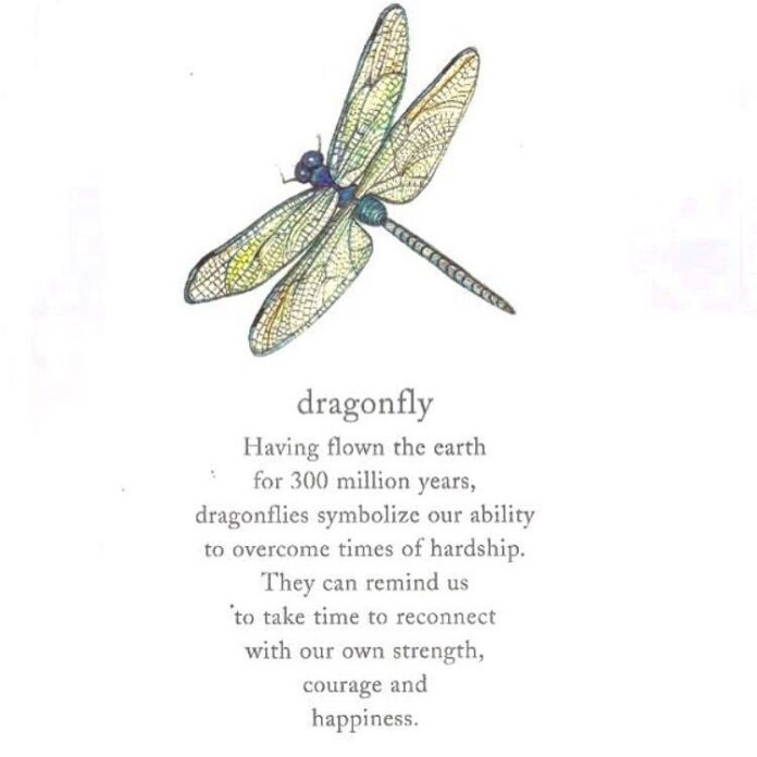 pin bubblegum pink on quotes and sayings dragonfly