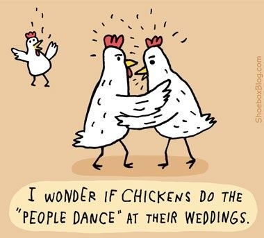 i love chicken quotes quotesgram chicken humor chicken