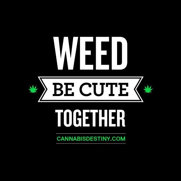 stoner quotes marijuana quotesgram