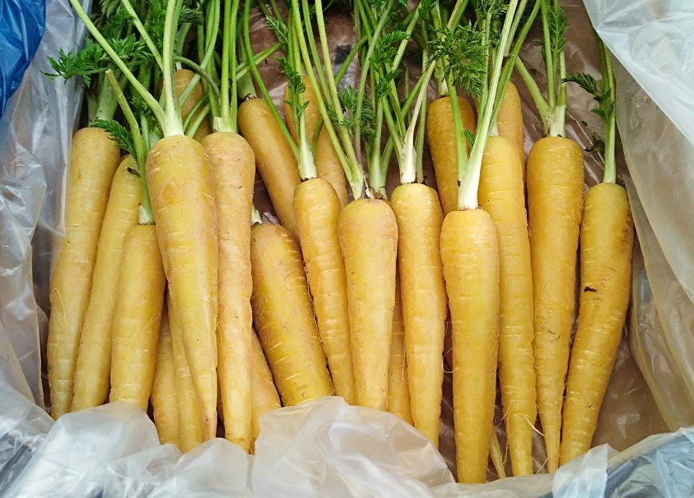 ¡Zanahorias!