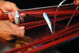 Pesca delle alici con la rete Menaica